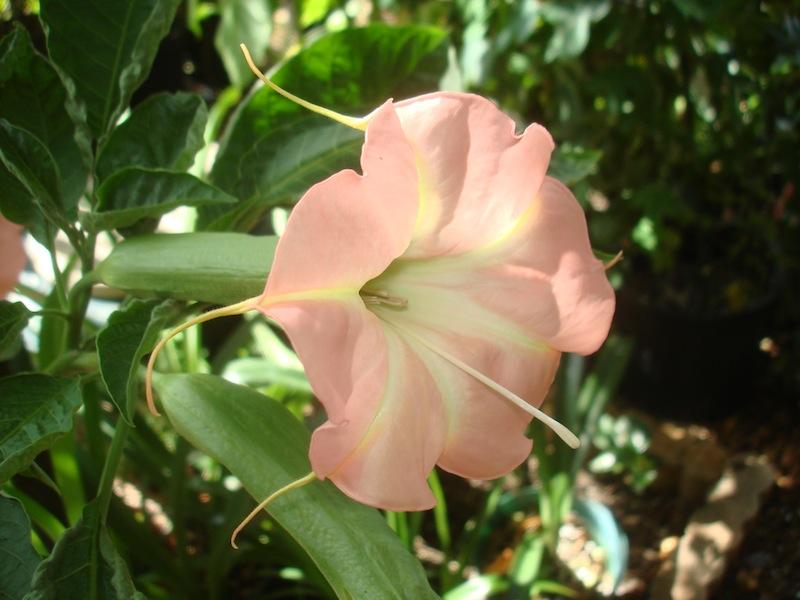 Ruffles & Flourishes