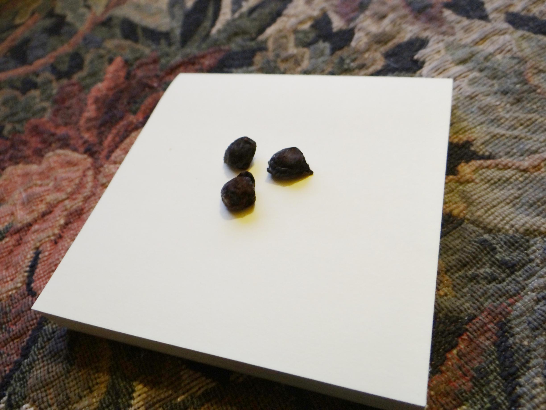 Commiphorra Myrrha seed